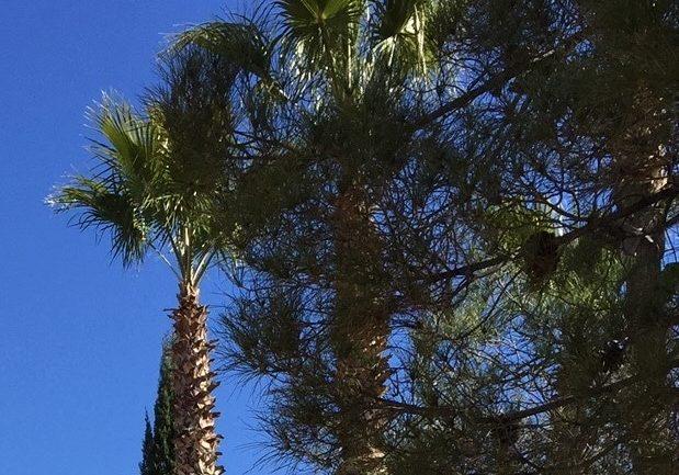 Palms In Arizono (2)